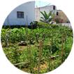 Bio-Garten